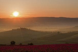 Italy, Tuscany, Crete, View of poppy field in front of farmの写真素材 [FYI04340178]