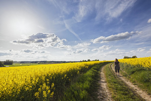 Germany, Bavaria, Mature woman walking through oilseed rapeの写真素材 [FYI04340210]