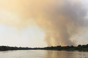 Brazil, Mato Grosso do Sul, Pantanal, Cuiaba River, Forest fの写真素材 [FYI04340303]