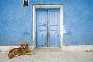 South America, Dog lying on streetの写真素材 [FYI04340304]