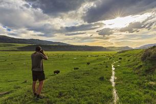 USA, Yellowstone National Park, Man photographing herd of buの写真素材 [FYI04340418]