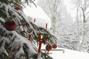 Burning candle on Christmas tree covered with snow, close-upの写真素材 [FYI04340544]