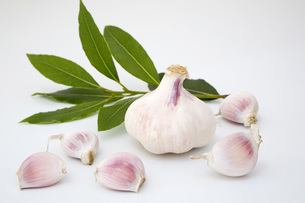 Fresh garlic and bay leaves, close-upの写真素材 [FYI04340562]