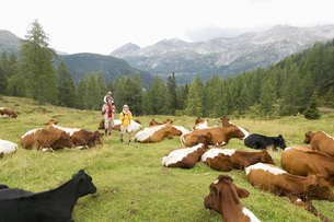 Austria, Salzburger Land, couple with son passing cattle herの写真素材 [FYI04340684]