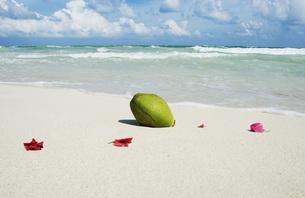 Mexiko, Yucatan, Petals on the beachの写真素材 [FYI04340756]