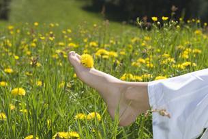 Austria, Salzbuger Land, Dandelion blossom placed on womans'の写真素材 [FYI04340820]