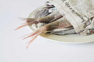 Red Snapper (Lutjanus campechanus) on plate, wrapped in papeの写真素材 [FYI04340867]