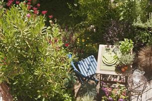 Austria, Salzburger Land, Table setting in gardenの写真素材 [FYI04340957]