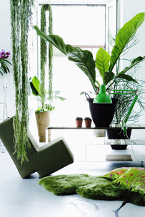 Modern living room with plantsの写真素材 [FYI04340987]