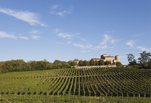France, Bordeaux,  Vineyards and Chateau Lacaussadeの写真素材 [FYI04341240]