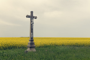 Czechia, Onsov, crucifix in front of a rape fieldの写真素材 [FYI04341372]