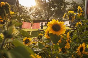 Austria, Radstadt, Farm, Female farmer hangs the washing onの写真素材 [FYI04341465]