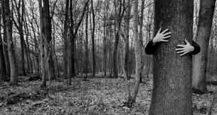 Two hands hugging a treeの写真素材 [FYI04341468]