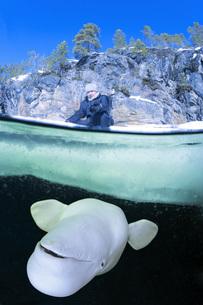 Russia, Arctic Circle Dive Centre, polar circle, man and belの写真素材 [FYI04341646]