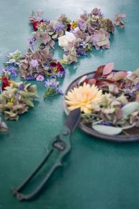 Flower arrangement and garden shearsの写真素材 [FYI04341905]