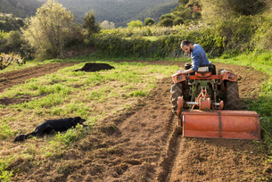 Farmer with tractor on field with dog watchingの写真素材 [FYI04341960]