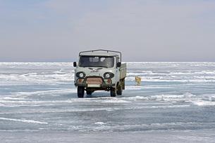 Russia, Lake Baikal, pickup truck and Siberian Husky on frozの写真素材 [FYI04341996]