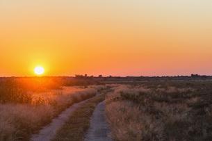 Botswana, Kalahari, Central Kalahari Game Reserve, piste atの写真素材 [FYI04342026]