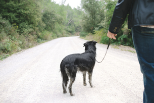 Woman going walkies with her dog in natureの写真素材 [FYI04342349]