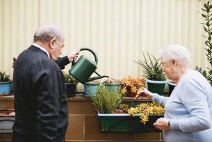 Senior couple gardening on balconyの写真素材 [FYI04342443]