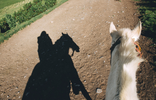 Peru, Cusco, shadow of woman riding horse on dirt roadの写真素材 [FYI04342599]