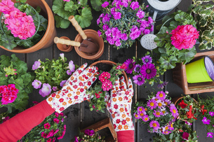 Gardening, different spring and summer flowers, flower box aの写真素材 [FYI04342730]