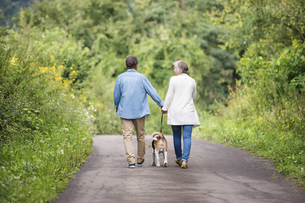 Back view of senior couple on a walk with dog in natureの写真素材 [FYI04342882]