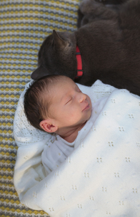 Newborn baby girl sleeping on the couch next to a gray catの写真素材 [FYI04343081]