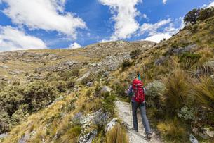 Peru, Andes, Cordillera Blanca, Huascaran National Park, touの写真素材 [FYI04343092]