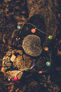 Sleeping hedgehog lying on dead wood in a forestの写真素材 [FYI04344062]