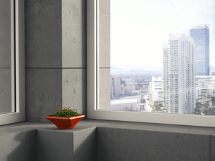 Red bowl of clover standing on window sill in a modern high-の写真素材 [FYI04357857]