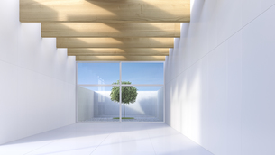 View through white hall to single tree standing in a courtyaのイラスト素材 [FYI04357895]