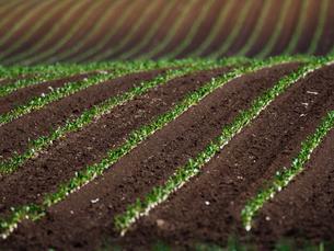 春の畑の写真素材 [FYI04385127]