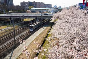 満開の桜並木と北総鉄道白井駅の写真素材 [FYI04390804]