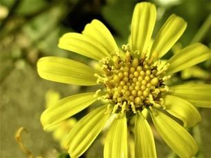 野生の黄色の花の写真素材 [FYI04394956]