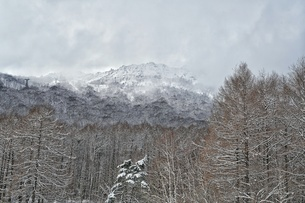 Low Angle View Of Bare Trees Against Snowcapped Mountainの写真素材 [FYI04396236]