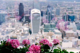 City Of London Seen From Windowsill With Flowersの写真素材 [FYI04397594]