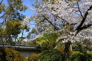 大阪城公園,千貫槽の塀と天守閣の写真素材 [FYI04410147]
