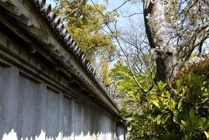 大阪城公園,千貫槽の塀の写真素材 [FYI04410220]