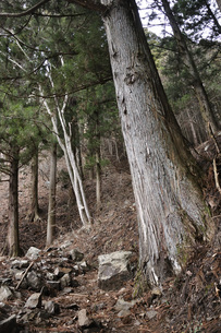 森の山道の写真素材 [FYI04411502]