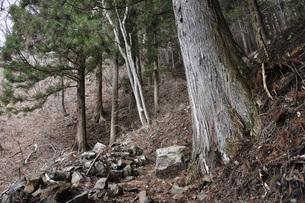 森の山道の写真素材 [FYI04411616]