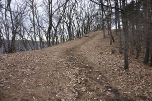 山頂へ向かう道の写真素材 [FYI04412015]