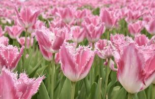 花畑の写真素材 [FYI04420857]