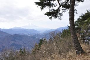 赤松に富士の写真素材 [FYI04425782]