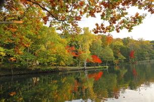 9月 紅葉の鳥沼公園 -北海道のエメラルドグリーンの池-の写真素材 [FYI04427639]