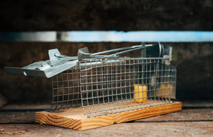 Close-up Of Mousetrap On Woodの写真素材 [FYI04446268]