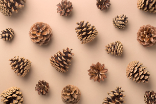 Directly Above Shot Of Pine Cones On Beige Backgroundの写真素材 [FYI04447699]