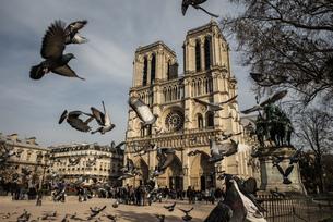 Pigeons Flying Against Notre Dame De Paris In Cityの写真素材 [FYI04452603]