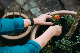 Cropped Hands Planting Plants In Potの写真素材 [FYI04469222]