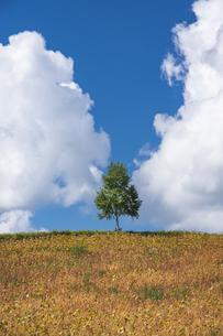 丘の一本木の写真素材 [FYI04473788]
